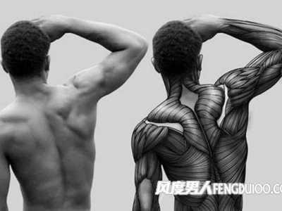 健身主要锻炼的肌肉群 男人健身锻炼哪些肌肉